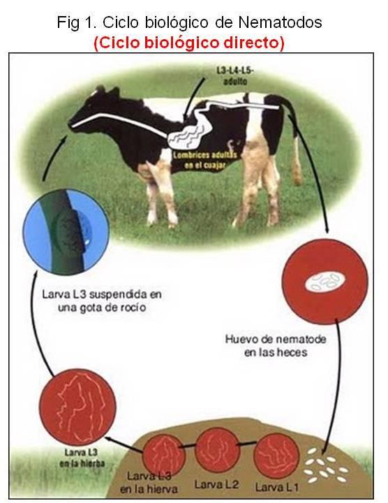 La omega 3 parásitos